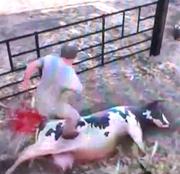 Депутат «Единой России» требует запретить игры с насилием над животными