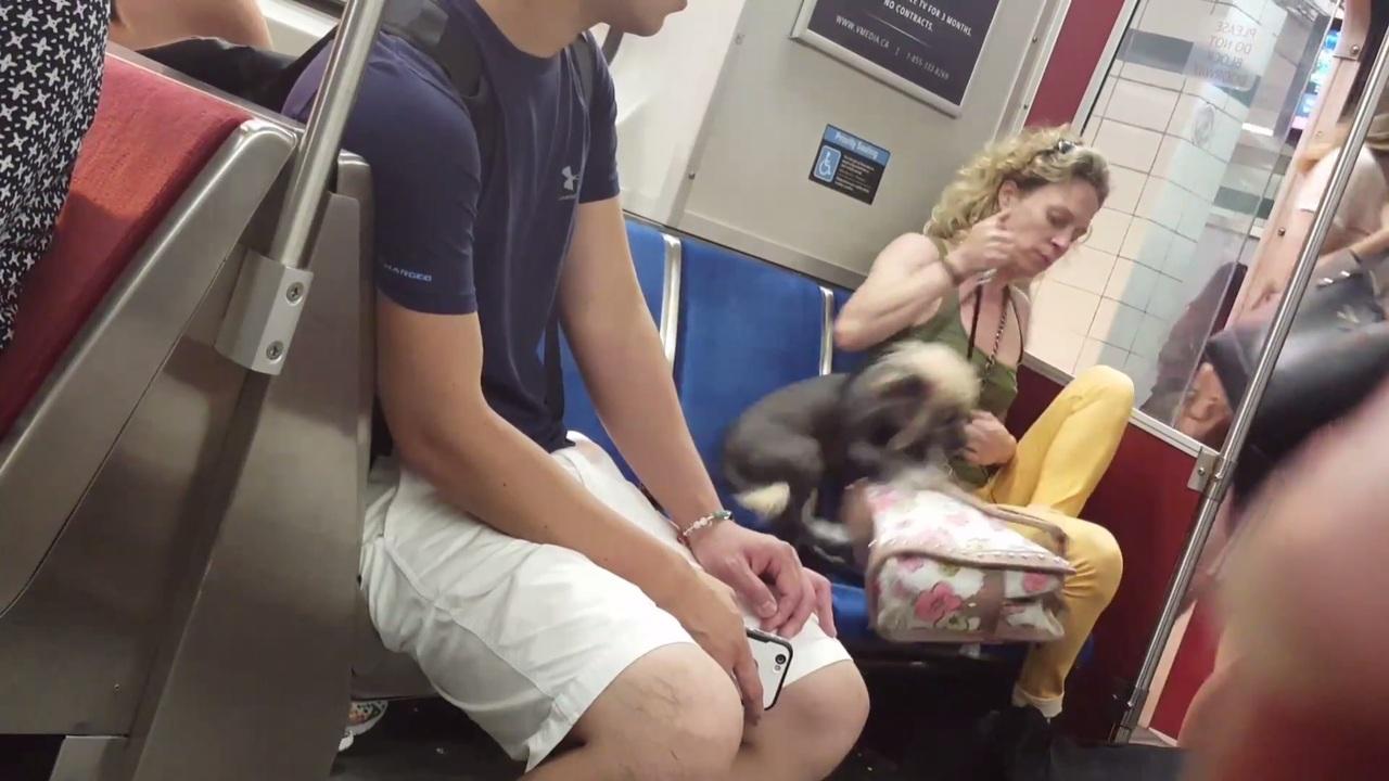 «Дама ссобачкой»: Жительница Торонто искусала свою собаку вметро