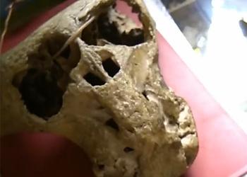 В кавказских горах обнаружили черепа неизвестных существ