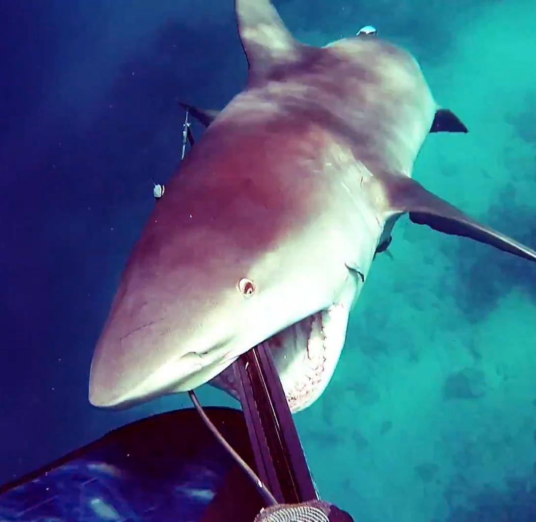 Акула напала надайвера