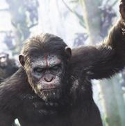 В игре Planet of the Apes: Last Frontier игроки смогут узнать, сколько содеялось  со Цезарем посредь фильмами «Планета обезьян»